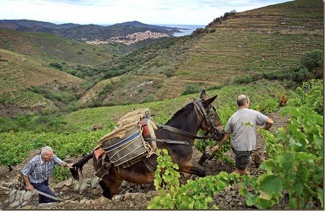 roussillon-french-vineyard-lg--gt_full_width_landscape