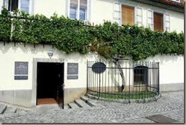 oldest vine