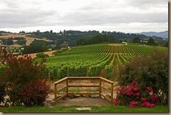 lenne-vineyard