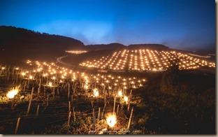 vineyard fires