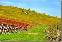 vineyard-2860941__340