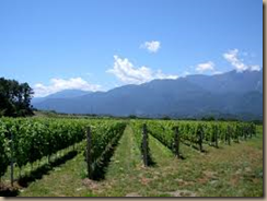 japanese vineyards