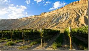 colorado vineyard