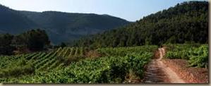 monsant vineyards