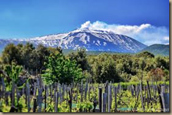 mt etna vineyards