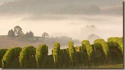 portland_valley_wineries