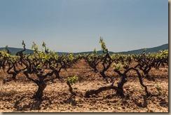 old vines 2