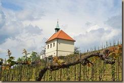 vineyard-3359511__340