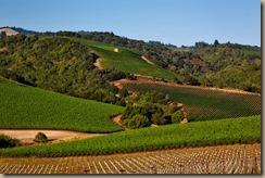vineyard-1597724__340