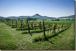 vineyard-3494428__340