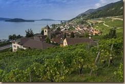 vineyard-3619525_960_720