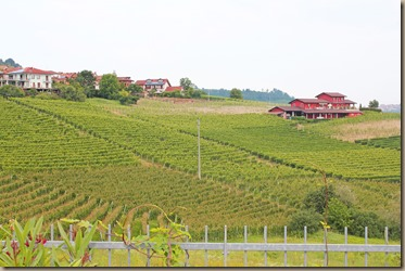 vineyards-a-aurelio-settimo