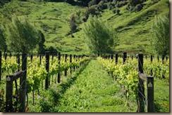 bio dynamic farming