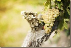 grapes-1048826_960_720
