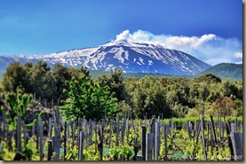 mt-etna-vineyards