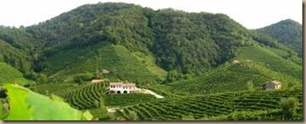 friuli vineyards