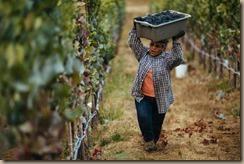 latina women harvesting