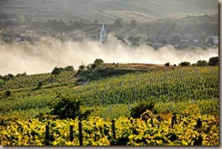 romania-liliac-winery-