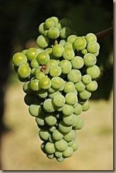 wine-3623692__340
