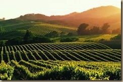 napa vineyards