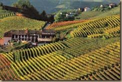 vineyards in barolo 2