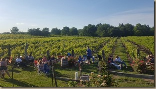 holy field vineyard