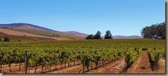vines-664529__340