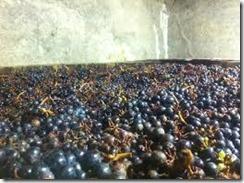 natural wine 2