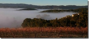 fog over vineyards