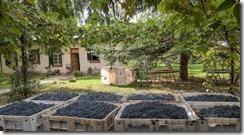 artisanal winemaking