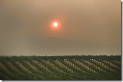 California Wildfires-Wine Country