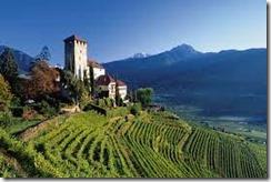 italian vineyards 2