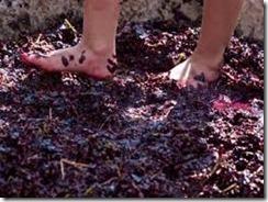 grape stomping 2