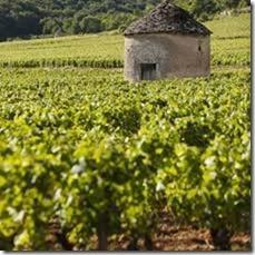 burgundy 2