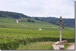 grand crus vineyards